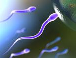 Половое здоровье мужчины, качество спермы, эякуляция