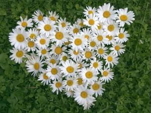 призыв о ценности любви